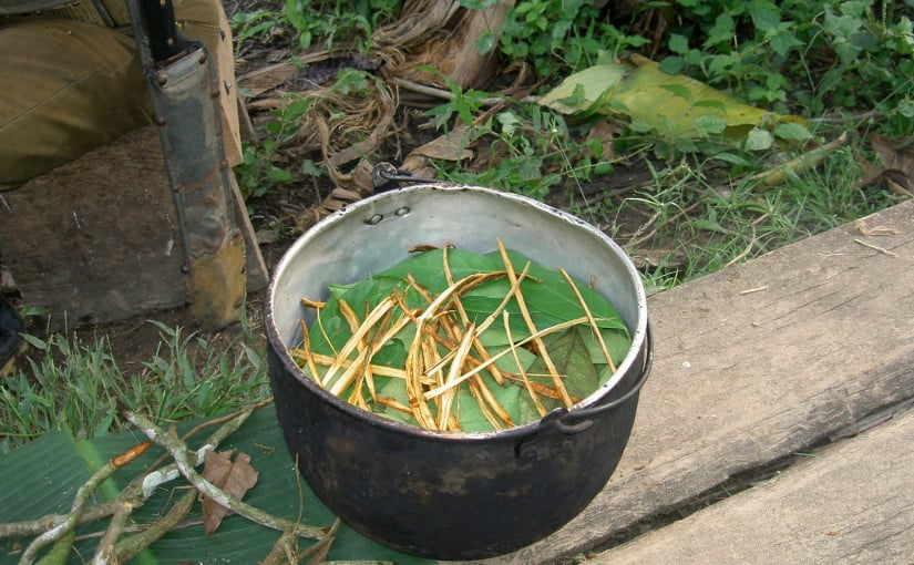 Origen y beneficios de la ayahuasca