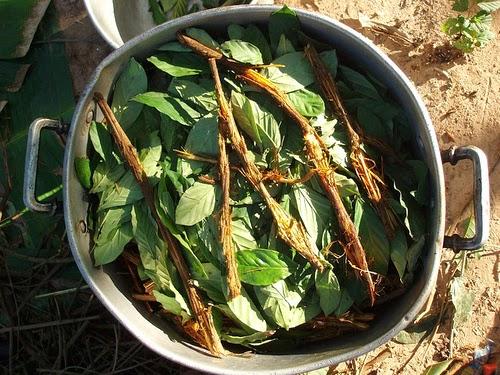 Comprar ayahuasca de Edabea